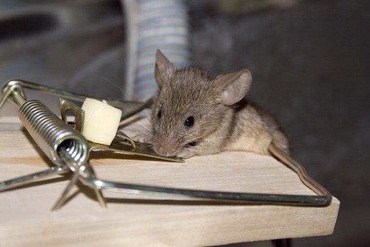 C mo construir una trampa electr nica para ratones - Como hacer una trampa para ratas ...