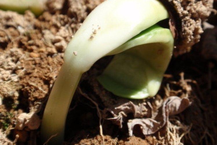 El suelo arcilloso es un desafío para los jardineros.