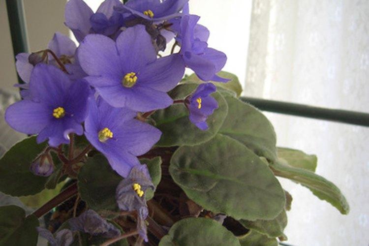 Las plantas con hojas redondas tienen una energía calmante.