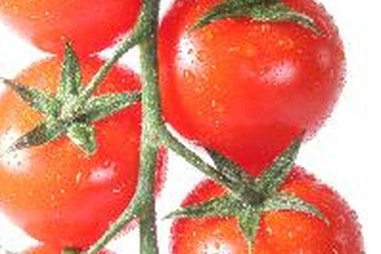 ¿Por qué los tomates no maduran en la rama?