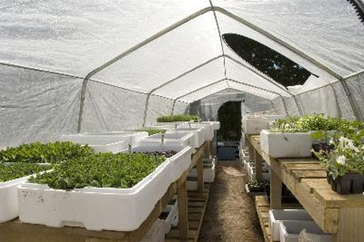 Qu debes usar para hacer el techo de un vivero for Vivero estructura