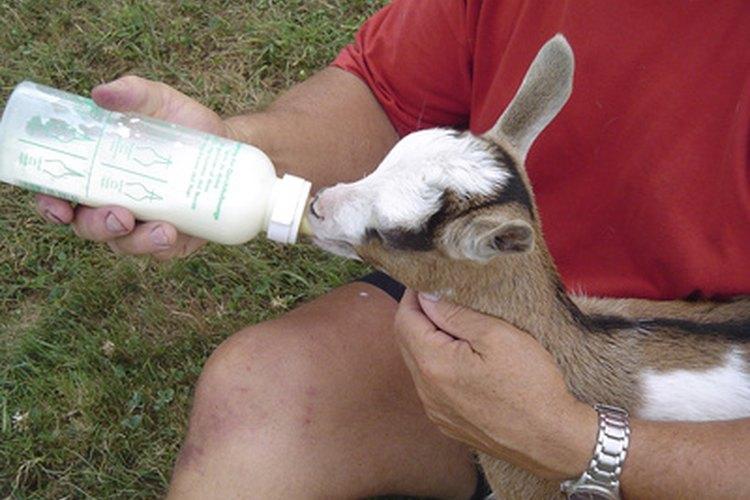 Los técnicos de veterinario son a veces responsables de la alimentación de los animales bajo su cuidado.