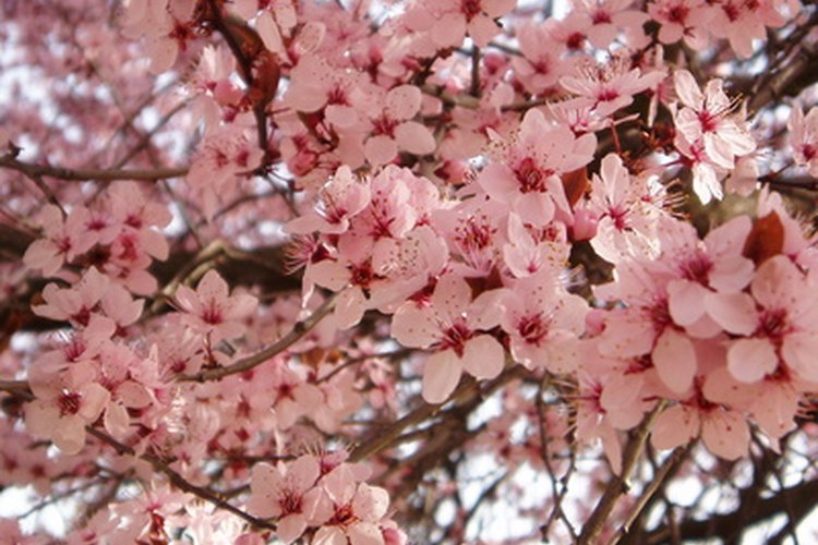 En la zona 10, algunos árboles florecen durante todo el año.