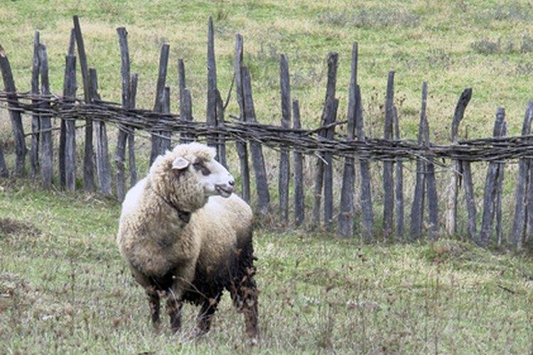 Laver la lana es fácil, solo tienes que seguir unas simples recomendaciones.
