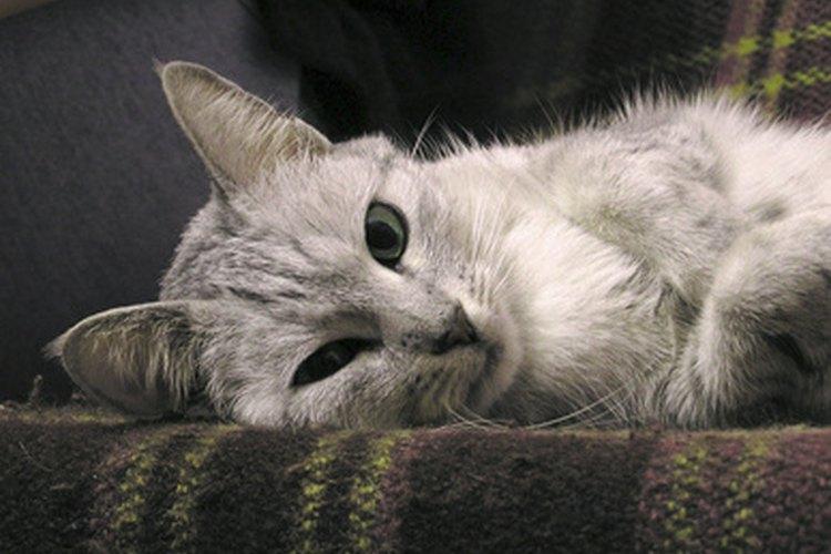 El bicarbonato de sodio y el vinagre pueden ser utilizados para eliminar naturalmente el olor a orina de un sofá.