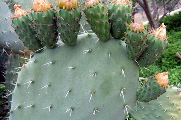 Los murciélagos ayudan a la supervivencia de las plantas frutales mediante la difusión de sus semillas.