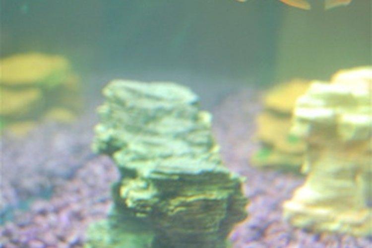 Para asegurar la supervivencia, los peces han desarrollado una gran cantidad de técnicas para conseguir alimento.
