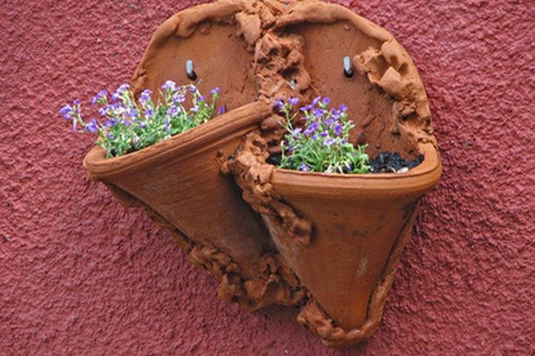 Es un gozo sembrar semillas o plantas pequeñas y saber que estás creando algo hermoso para tu casa.