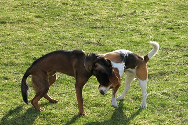 Se dice que el perro es el mejor amigo del hombre.