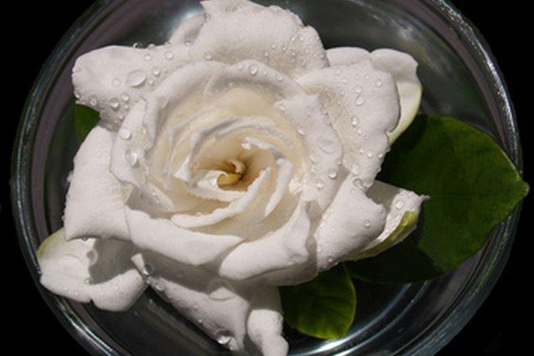 Una gardenia flotando en el agua.