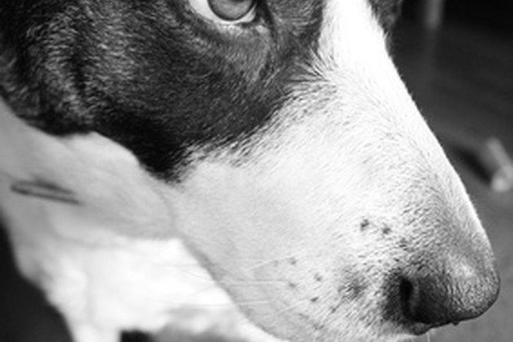 El bicarbonato de sodio puede servir para darle un baño desodorizante a tu perro.