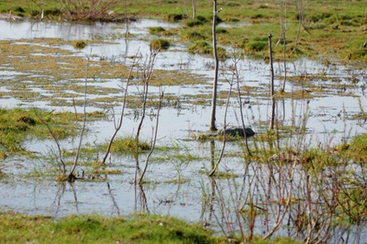 Si tu patio se parece a un pantano, debes mejorar su drenaje.