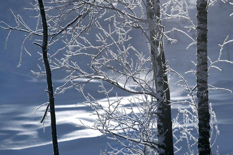 El invierno es un tiempo de inactividad para los árboles de hoja caduca.