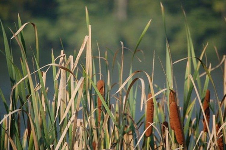 Hay más de 4.000 especies de lombrices.