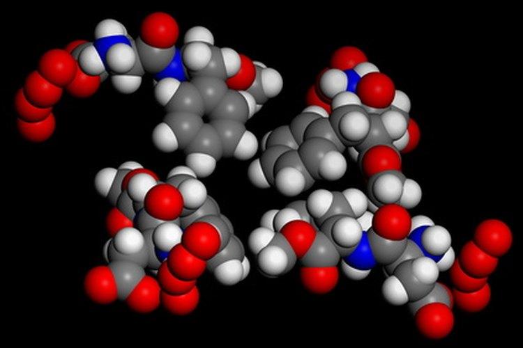 Una enzima es un tipo de proteína que cataliza las reacciones químicas.