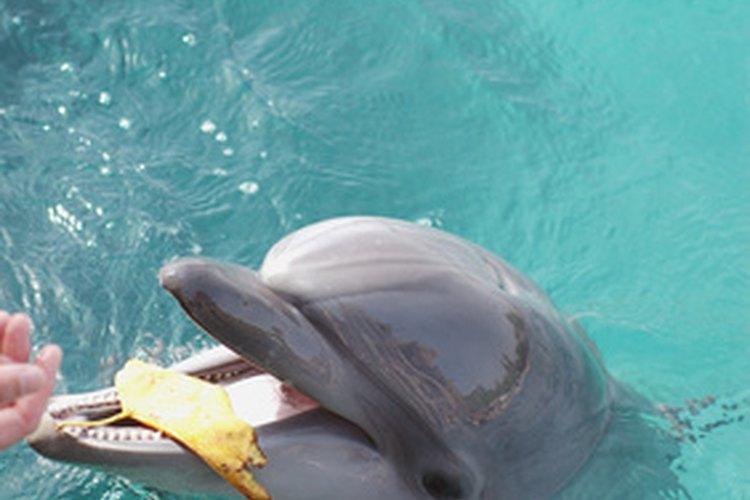 Alimentarlos es una forma de interactuar con estos mamíferos marinos amigables.