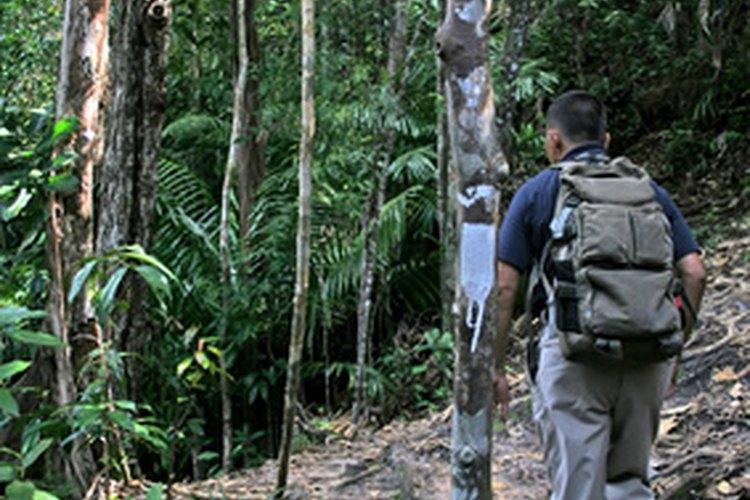 Los recorridos por la selva son una forma popular de ecoturismo.