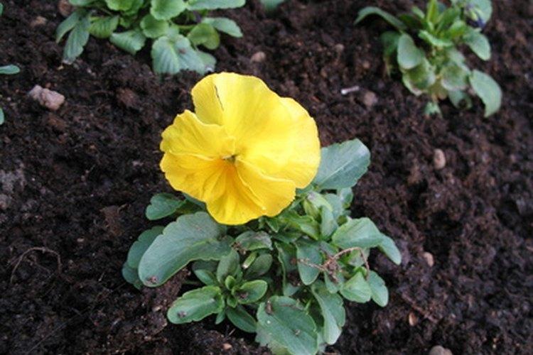 Cultiva un jardín lleno de flores con tu hijo.