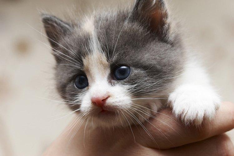 Los gatitos recién nacidos suelen presentar problemas en los ojos que pueden ser causados por virus o bacterias.