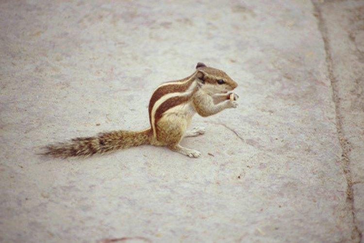 Muchas otras criaturas actúan como depredadores naturales de serpientes.