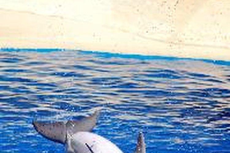 Uno de los símbolos de Poseidón es el delfín.