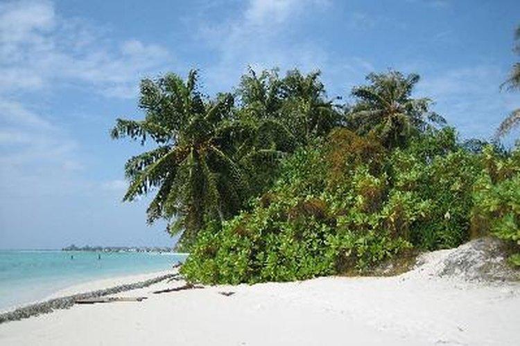 Una isla tropical.