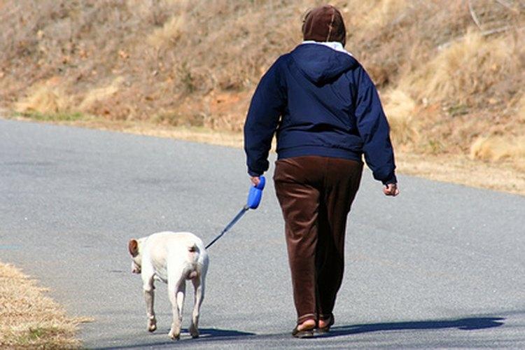 Muchas personas contratan un paseador de perros para ejercitar sus mascotas.