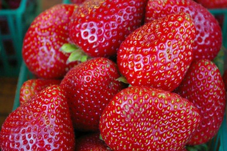 Conoce la forma en la que se reproducen las fresas.
