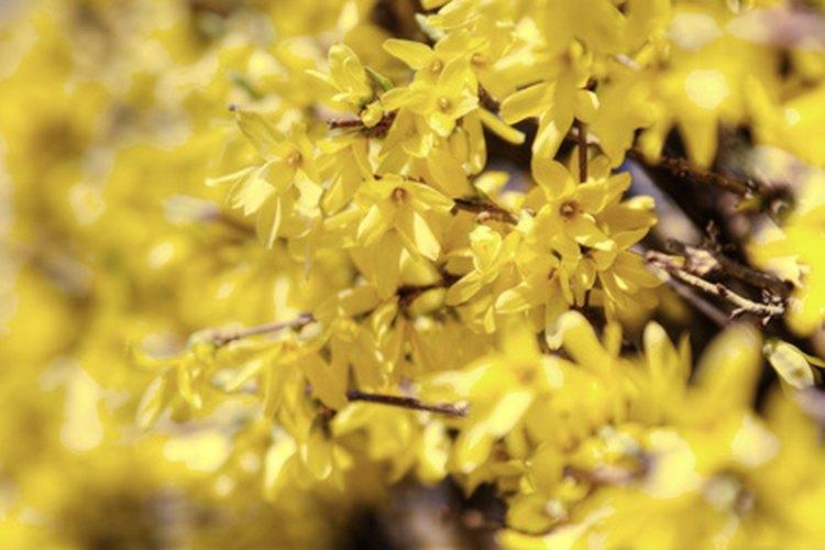 Los amarillos suaves y claros son cálidos y dan sensación de comodidad.