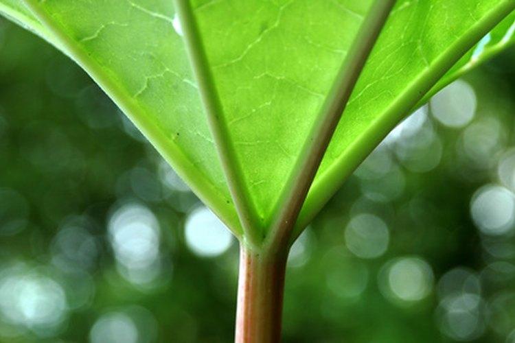 El color verde brinda la sensación de buena salud.