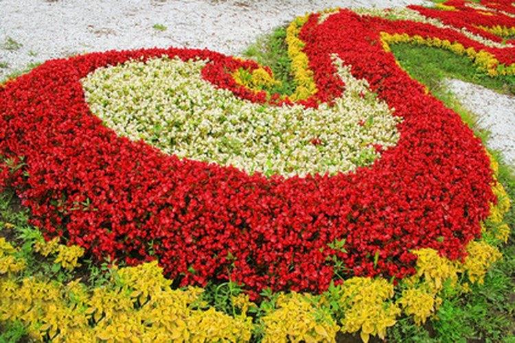 Los canteros de flores elevados pueden contener muchas flores.
