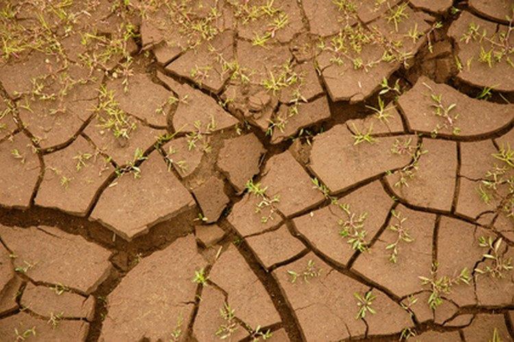 Definici n de los diferentes tipos de suelo for Que es un vivero frutal