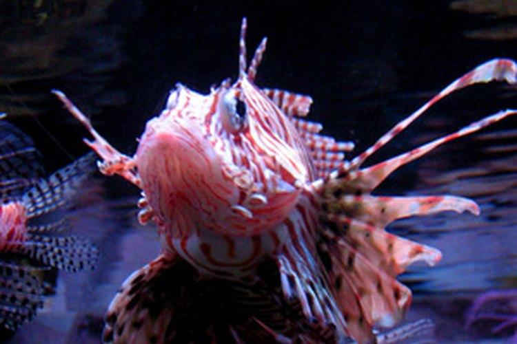 Los peces tiene una amplia diversidad de especies.