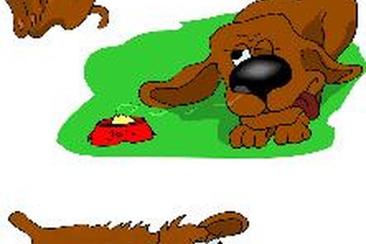 En algunos casos, incluso podría ser perjudicial para los ojos de tu perro, por lo que opta por una alternativa más segura.