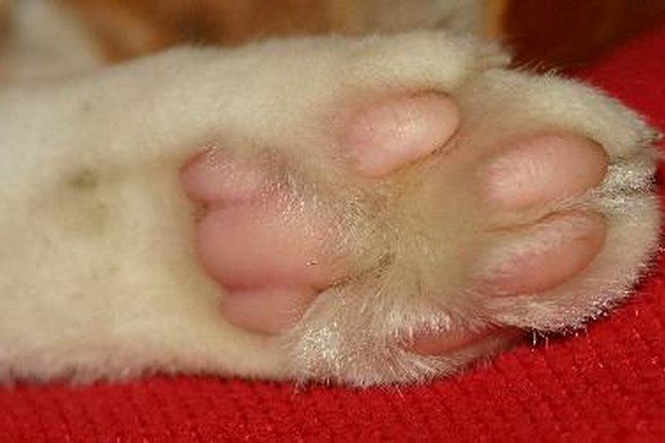 Inspeccionar de cerca la pata de tu gato puede revelar grietas, magulladuras u otras irritaciones.