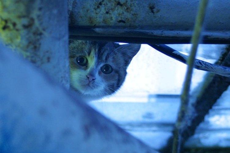 En raras ocasiones, la gata puede llegar a matar a su propia cría.