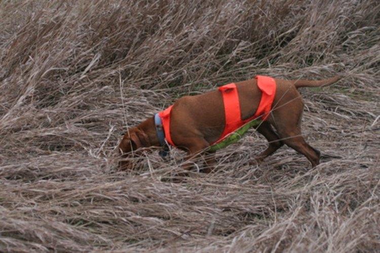 Los terrenos de caza del estado se usan para caza.