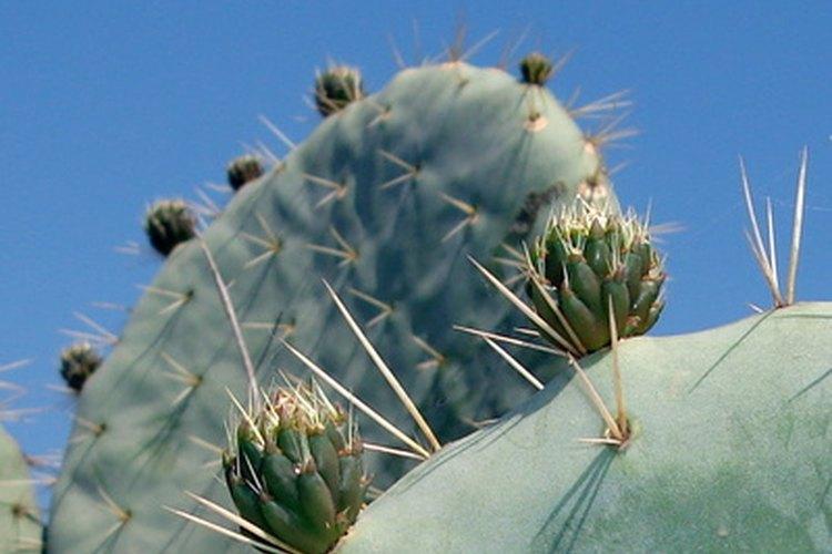 Mimos y cuidados para tu cactus.