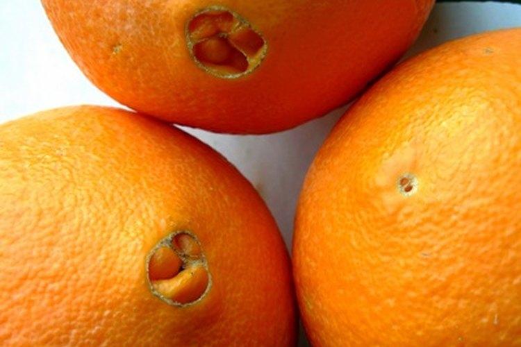 Las naranjas de ombligo no tienen semillas y sus flores no producen polen.