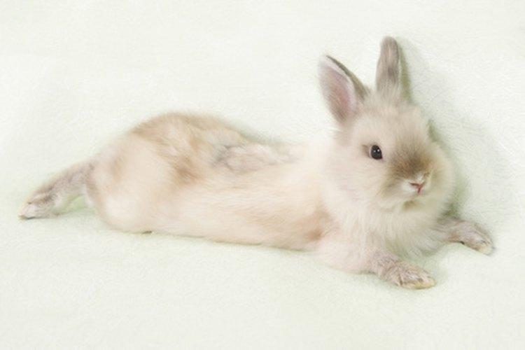 Los conejos no pueden ser llevados a bordo de vuelos de Delta.