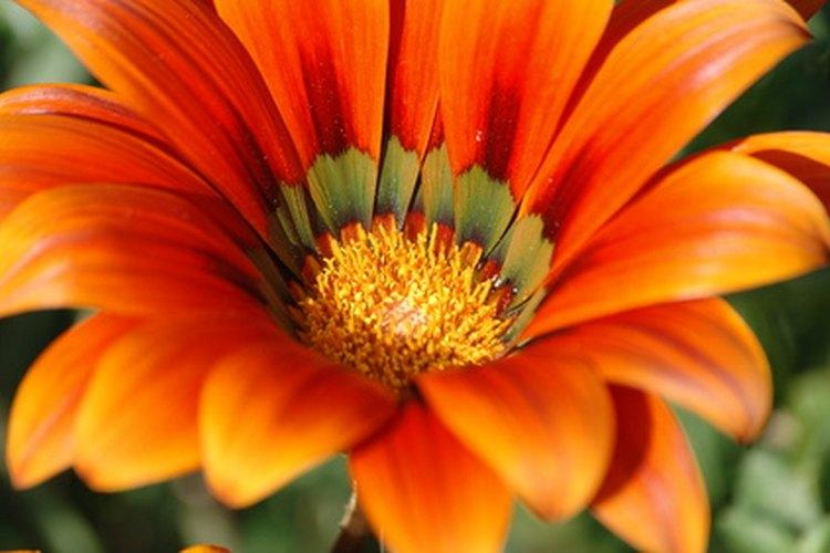 Conoce las partes de una flor.