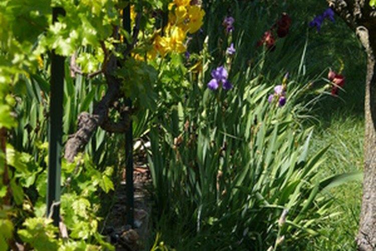Los jardines orientados hacia el norte quedan en la sombra durante la mayor parte del día.