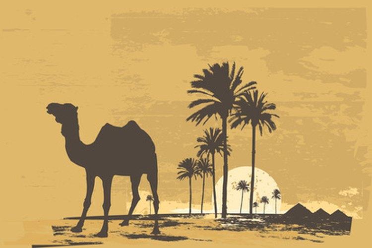 Los animales del desierto y las plantas sobreviven y prosperan.