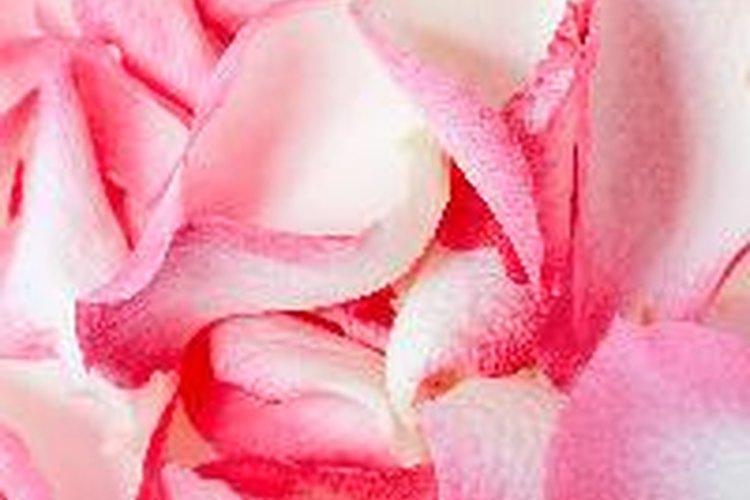 Almacena rosas en el refrigerador a temperaturas de entre 0 y 3 grados centígrados.