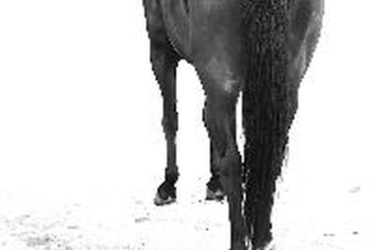 Información general sobre los caballos.