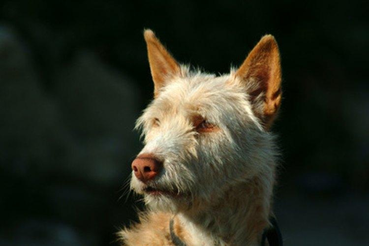 Mantén a tu mascota cálida en el invierno con una casa caliente para perro.