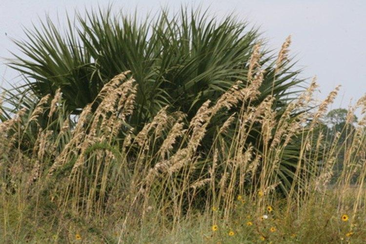 Usa la harina de avena como remplazo saludable de la harina de trigo.