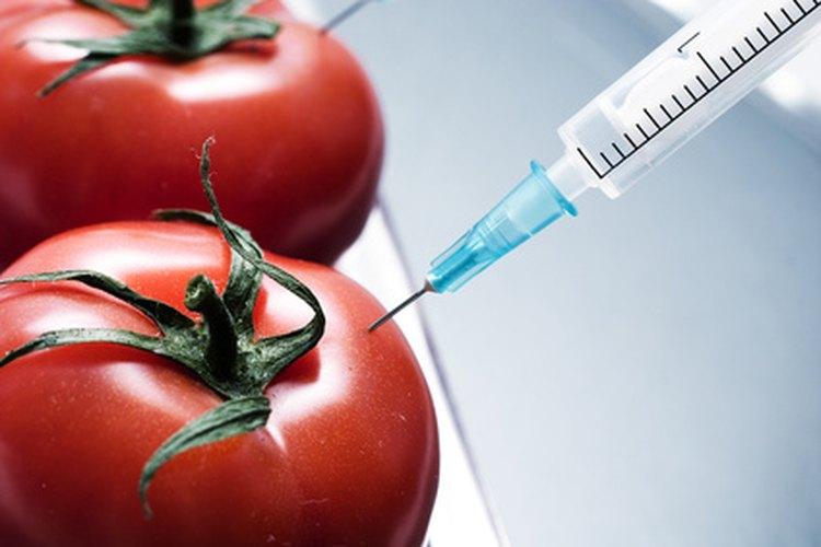 La hormona que se inyecta en uno de estos tomates es una variable controlada.