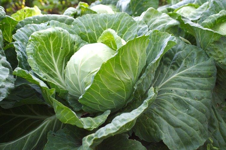Los vegetales crucíferos, como los coles, están entre los alimentos que ocasionan gases.