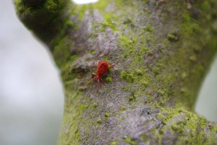 Los insectos pueden destruir las plantas de interiores.